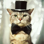 今日はビシッと決めていくぜ! ネクタイを締めたネコの画像10枚