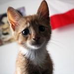 いったいどうしたんだい? 困った顔をしたネコの写真14枚