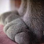 ちょこんと可愛らしい ネコの手を中心にした写真15選