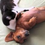 まぁまぁまぁとりあえず落ち着け 暴れる犬をなだめるネコ
