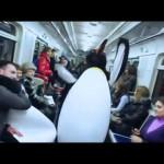 ペンギンの群れがロシアの地下鉄で大暴れ ホームで車内でやりたい放題