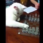 チェスをするネコの一手にお姉さんもついつい爆笑
