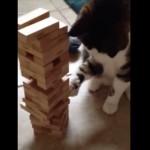 見事なお手前でございます ジェンガをプレイする猫