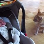 初めて見た人間の赤ちゃんの前にして戸惑うネコ