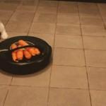 【GIF画像9枚】なんだコイツ、動くぞ! 掃除ロボット「ルンバ」に翻弄されるペット