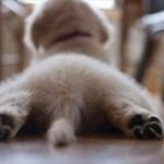プリっとしたお尻に尻尾がちょろり もふもふな犬のお尻写真21選