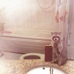 動物たちが鏡に写った姿をカメラで自分撮りしているユニークな広告