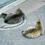 完全に一致 シンクロ率が100%なネコの写真21選
