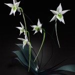 存在感に圧倒 ガラスで作られた巨大な花