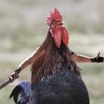 【画像21枚】キモかわいい? 鳥に人間の腕をつけた合成写真