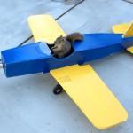 まさかの展開 ラジコン飛行機に乗って飛び立つリス