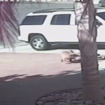 猛犬の襲撃から少年を守ったネコ