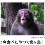あなたは「桃太郎」三部作を観たか? 「ボケて」による同行した猿の災難