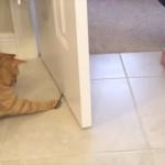 7年も同じスプーンを愛し続ける猫