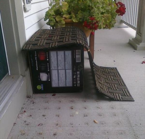 deliveryman003