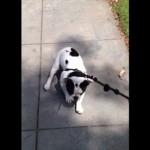 飼い主が告げる行き先によって喜んでついてきたりイヤイヤをする犬