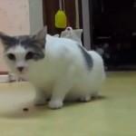 反射神経良すぎ 驚いた猫が取った行動