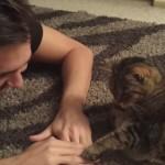 飼い主と手を乗せ合って遊んでいたネコの反逆