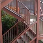 しっぽをくわえたまま階段をのぼるネコの謎行動