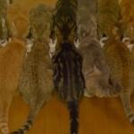 なんだかオトクな気分に 鏡に向かわせながら9匹のネコにご飯を食べてもらった