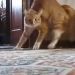 なぜその姿勢なんだ 突然立ち上がり二足歩行するネコ