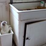 高い場所に置いてあるオモチャを取りたいドジっ子なネコ