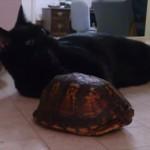 遊びたい子猫を前にしてまったく動かなくなってしまった亀