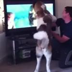 テレビに映るクマに飛びかかるワンちゃん