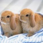 ずるいぐらいに可愛い! 動物の子供達によるカップル写真