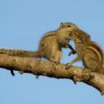 【画像15枚】とっても仲良し 動物同士がキスしちゃってる写真集