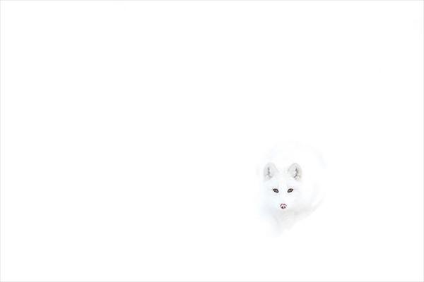 010_R