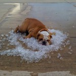 こりゃたまらん 尋常じゃない暑さが伝わってくる写真