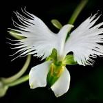 自然が生み出した偶然 ヒトや鳥に見える花の写真17選