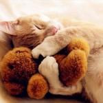 疲れてる時に見たら癒やされる ぬいぐるみに寄り添う動物の写真24枚