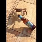 自身の何倍もの大きさのビール瓶を余裕で引っ張っちゃう 意外と怪力なカニ