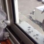 窓ガラスが邪魔をしてハトに触りたいけどうまく触れないネコ