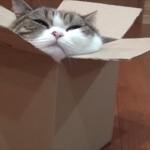 わざわざそんな箱に入らなくても… 埋もれるように箱に入るネコ