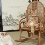 座り心地はいかが? ロッキングチェアに座ってくつろぐネコ