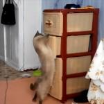 過剰な好奇心は身を滅ぼす 引き出しからモノを取り出そうとするも盛大に失敗しちゃったネコ