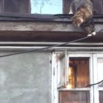 小さな窓からお部屋の中に入りたいネコ さぁ、これからどうする?