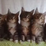 シンクロ率100% 並んで同じ動きをする七匹の子ネコ