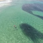 美しい海に現れた謎の黒い影 その正体とは…?