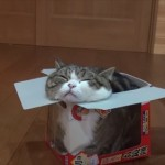 おニューの箱がお気に入り 鏡餅の箱にまったり入るネコ