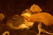 いつでもいっしょ! 常に寄り添っている母ネコと子ネコ