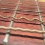意外に激しく震えてます 演奏中のギターの弦を拡大して撮影