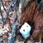僕になにか用かい? 倒木の穴からヒョコヒョコと顔を出すオコジョ