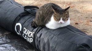 帰りたいけど帰れない キャンプの撤収を鉄の意志で邪魔するネコ